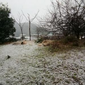 令和の初雪 2020年1月18日 千葉県大多喜町