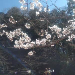 春めいてきたので、久方ぶりにアスモ&茂原公園へと参りました20200320