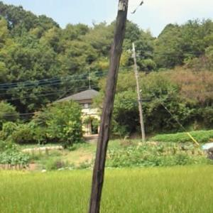 小田急多摩線『黒川』駅周辺の長閑な風景
