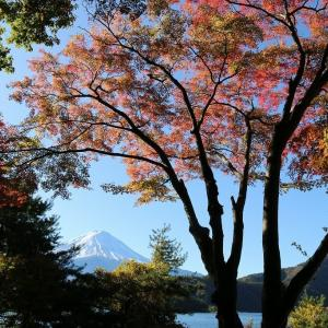 紅葉と富士山(11/18 e)
