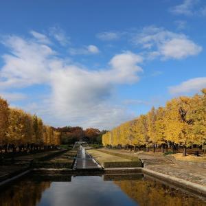 昭和記念公園(11/21 e)