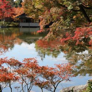 昭和記念公園(11/26 e)