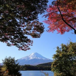 富士山(11/29 m)