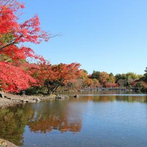 昭和記念公園(12/2 m)
