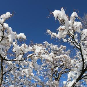 冬景色(1/24 n)