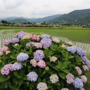 開成町の風景(6/24 m)