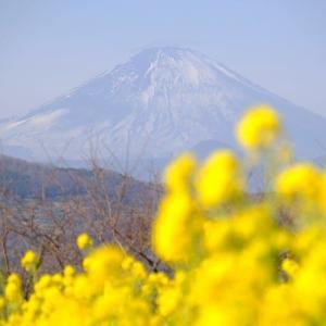 吾妻山の春(1/18 e)