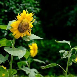 夏の花(6/16 m)