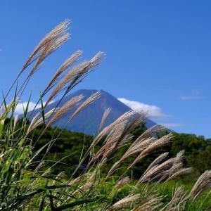 ススキと富士山(9/27 m)
