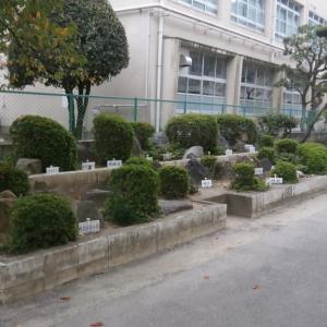 ■ 福岡市立小学校の校舎の耐力度調査で見つけた岩石標本