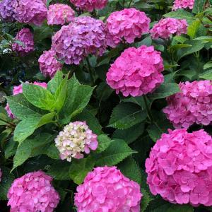 夏至・新月の「あなたの魂の望み」が叶っていきますように。鎌倉の神社に参拝しました。