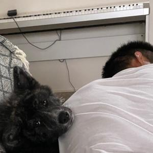 ギンちゃんお腹治りました✨