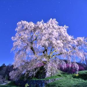 桜❗️ 思い出のプレイバックシーン ‼️ 吉野山は見事でした❣️今年の開花は❓