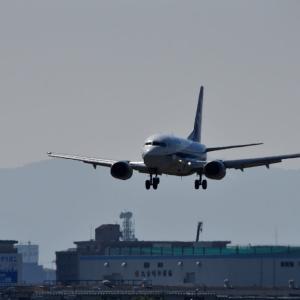 ANA、ボーイング 737-500「スーパードルフィン」を6月14日退役となる❗️JA306K