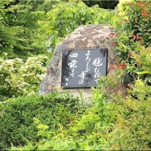 6/20(土)は、府中市「あじさい寺(神宮寺)」を散策でした(^.-)☆(2)