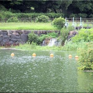 7/7(火)午後は、春日池公園をウォーキングでした(^.-)☆(3)