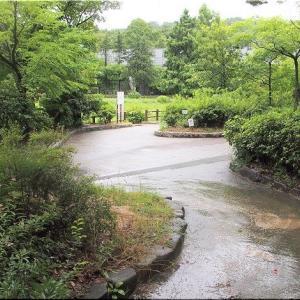 7/7(火)午後は、春日池公園をウォーキングでした(^.-)☆(4)
