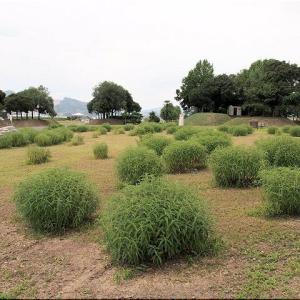 天神社からの帰路には「かさおか太陽の広場」をウォーキングでした(^.-)☆(5)