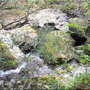 9/6(日)は「滝山渓谷グリーンシャワーロード」を散策でした(^.-)☆(11)