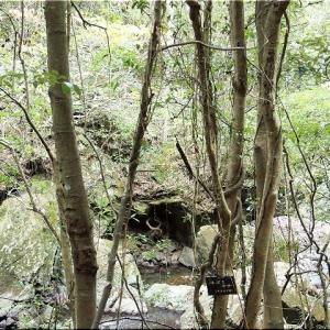 9/6(日)は「滝山渓谷グリーンシャワーロード」を散策でした(^.-)☆(12)