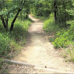 5/11(火)の午前中は、「蔵王憩いの森」を散策でした(^.-)☆(13)