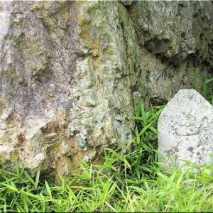 6/22(火)、「三光寺」とお別れし、倉敷市の「まきび公園」へと向かいます事に(4)