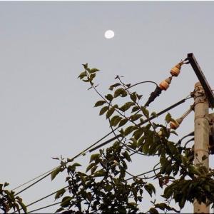今朝も、中秋の名月から4日後のお月様をパチリとなりました(^.-)☆