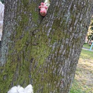 🐽🐷豚さんが宿る木🌳🐽🐷
