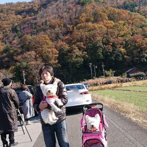 白いぬ姉妹💛山本山のおばあちゃんに会いに行く💛