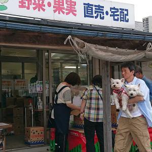 鳥取県大栄🍉スイカを買いに🚕💨今年は☔