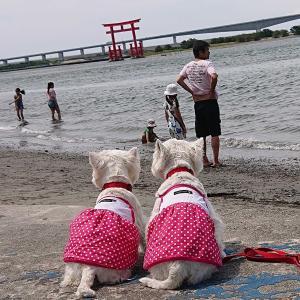汽水湖✨浜名湖🐚