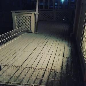 雪が降るでちゅか!