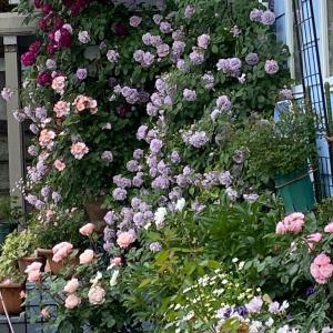 庭師匠のオープンガーデンへ