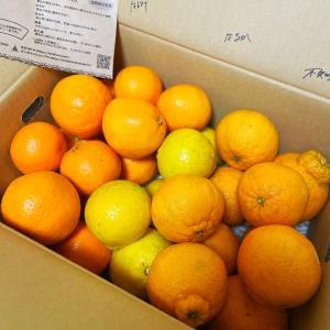 幸せな柑橘類のセット