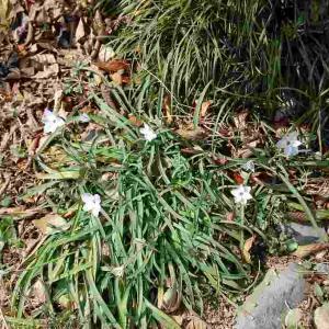 寒いけど春のお花