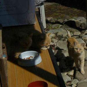 居候猫たち