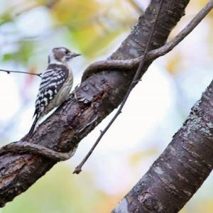 さくら公園の小鳥たち