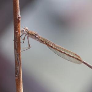 庭の虫たち(2)