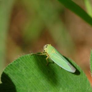 小さい虫たち