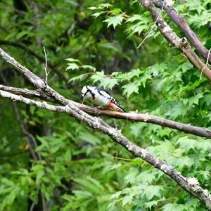 公園の小鳥たち