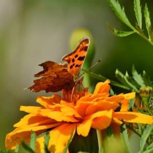庭の花に蝶と蛾