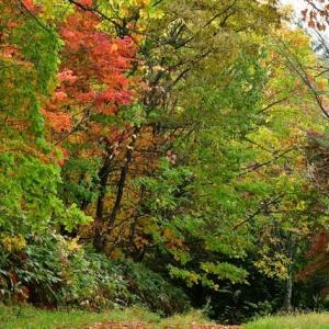 森林公園の秋