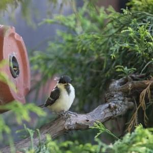 庭からの巣立ち
