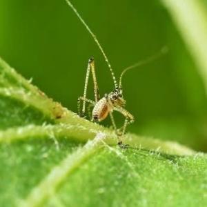 昆虫の赤ちゃん