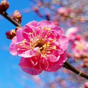 春が少しずつ。。。♪
