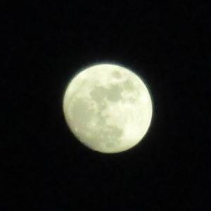 後の月 (十三夜)