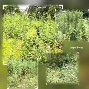 空き地の草が繁茂の対応を