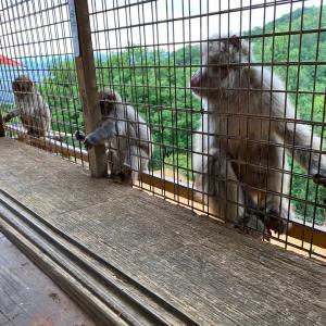 嵐山★お猿さん