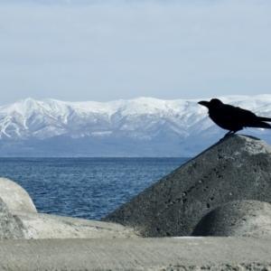 北海道の海の幸 贅沢な海鮮セットで北海道を応援しよう