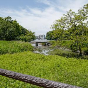 【関東日帰り旅】三浦半島三崎口「小網代の森」は、貴重な自然と気軽なハイキングを楽しめるおでかけスポットです。